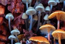 fascinating fungi