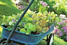 Inspiratie, ideeën voor de tuin / Op zoek naar een leuk idee voor je tuin? Kijk dan eens op dit board!