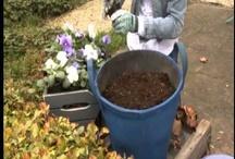 Tuintips / Handige tips voor in je tuin. Elke maand handige nieuwe tips!