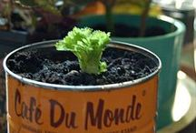 Give Veggies a Second Chance / Different way to regrow your veggies & herbs.