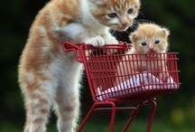 Absolutely Cute Animals / Animals that are just too cute #cute #animals