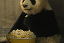 """Animated Animal Gifs / A neat-o collection of """"animated"""" animal gifs from around the internet."""