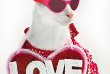Be My Valentine Animals / February 14 is the day to celebrate Valentine's day with your pet. Maybe plenty of bone shaped treats is in order! Or maybe a huge bag of pink catnip!