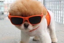 Animals With Glasses !
