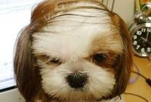 Doggie Hair Do's
