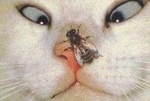 CAT Closeups