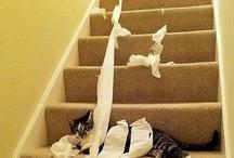 Cats Love Paper Shredding