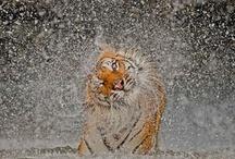 Wet Animals