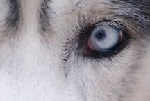 Dog Closeups