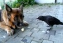 Animals On Video!