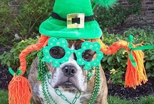 St. Patrick's Day Pets / Kiss me I'm Irish. To celebrate St Patty's Day - March 17 - here's a collection of green, lucky, and funny pictures of pets for St. Patty's Day in costumes and accessories. While the leprechaun is out looking for his pot of gold at the end of the rainbow.... we are out looking for the 3 leaved clover.