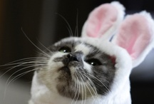 Easter Pets / Dogs, cats, and other animals with bunny ears. Will the real Easter Bunny please stand up?