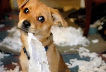Dogs Love Paper Messes Too / Dogs shredding and making a cute mess.