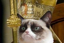 Grumpy Cat Everything