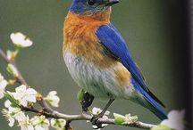 Backyard birder