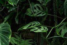 botánica / by Pola Vilches