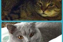 Cats / Les chats...