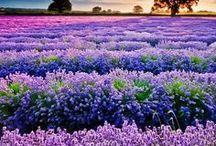 Nature... / Fleurs