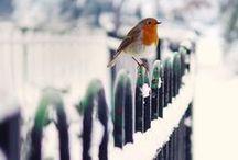 snow ... true love!