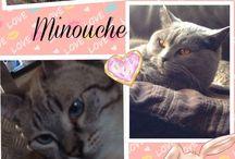 Minouche, Léo et Kiwi / My lovely cats