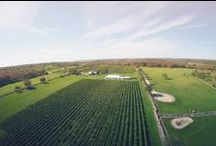 Beautiful Views / Nothing beats a gorgeous day at the vineyard. Just look at these amazing views!