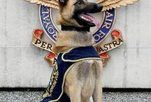 警察犬・軍用犬・救助犬