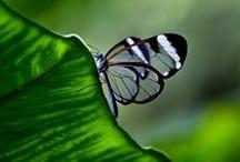 }{ Flutterbys / by Karen Arbon