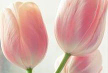-Spring-