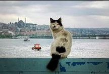 {Istanbul cats} / #Istanbul's favourite animal!