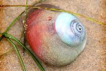 Sea Shells / The hard, empty shell of a small sea creature (such as a clam). Full Definition of Seashell (the shell of a marine animal.)