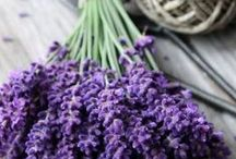Lavender for me