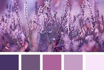 Color #Palette