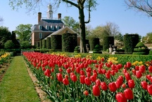 Williamsburg, Virginia / Plan your next getaway to Williamsburg, Virginia. A trip here will take you back in time to tell you the story of the birth of America.