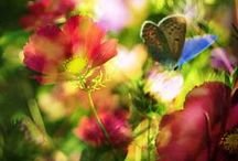 beautiful - colorful