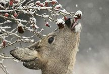 Oh dear! Oh deer! / In Japan they bow