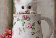 The Love Cats / The cutest animals on earth