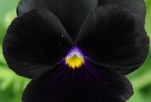 Garden / Tuininspiratie