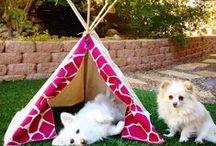Pomeranians / Cute Pomeranians on Pinterest!
