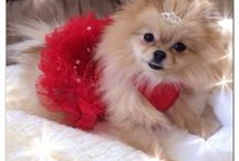 Pommy Mommy Red Glitzy Christmas Dress!  / I love dressing up my girls for any occasion. Here are some fabulous dresses made just for Pomeranians!