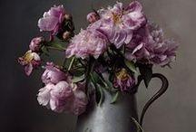 Güller / Roses