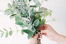 floral // nature // leaf