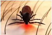 Diy * Maison et Jardin #Insecticides & répulsifs naturels / Truc et astuce