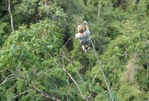 Gibbon experience / The Gibbon Experience is an innovative conservation project in Bokeo Nature Reserve, Northern Laos.