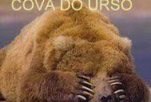 Cova do Urso / Ilustrações do meu blogue