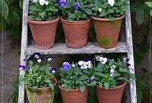 Antique Terracotta Pots / Gorgeous victorian terracotta long toms are perfect for the cottage garden