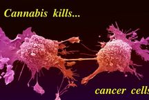Cannabis The miracle drug ..