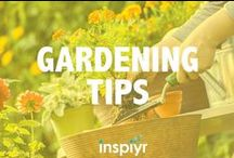 Gardening Tips / Let's put that green thumb to work and watch those fruits and veggies grow! Harvest some new inspiration with these gardening tips