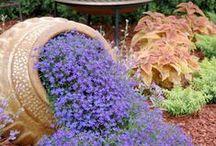 Bahçe / peyzaj....