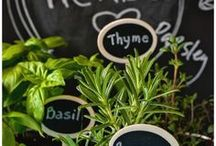 In the Garden - Herbs & Medicinals / How the propagate, grow, show, harvest & store your herbs.