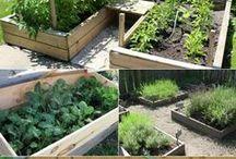 In the Garden - Garden Plots,  Raise Beds & Vertical Gardens - Creative & Practical